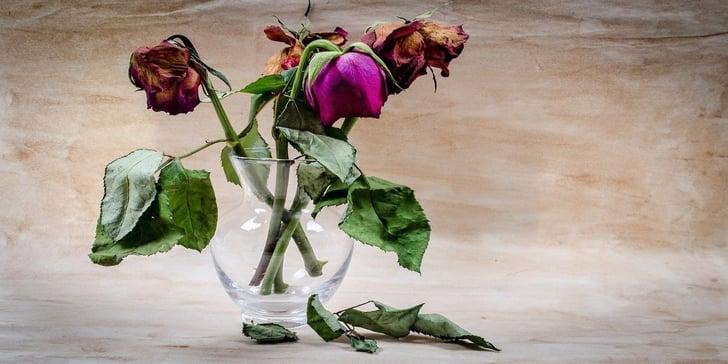 flower-316437_1280